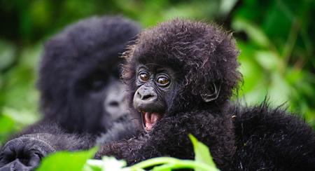 2 Day Uganda Gorilla Trek