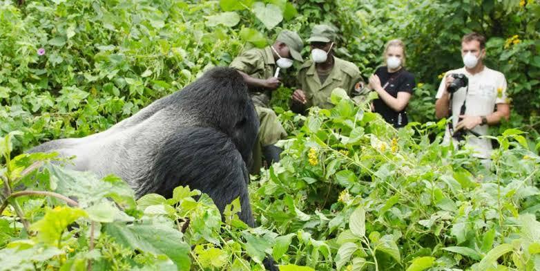 Who is eligible to trek gorillas