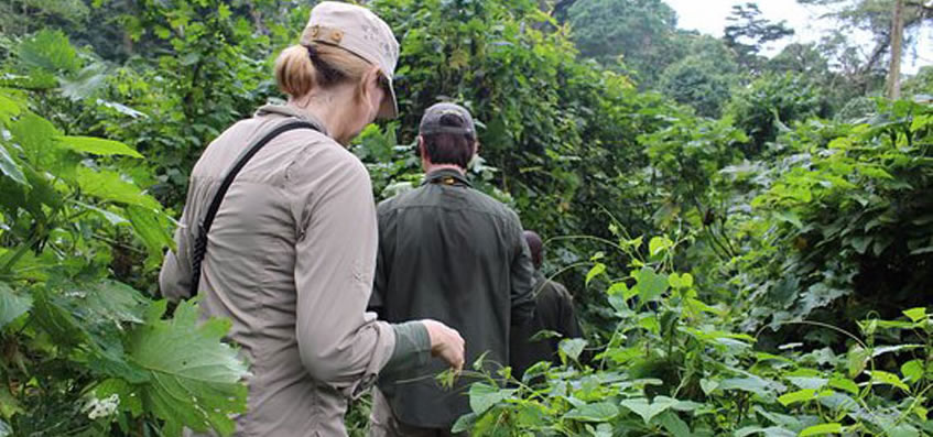 Trekking to see gorillas
