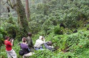 Is gorilla trekking worth it?