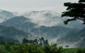 weather in Bwindi Forest