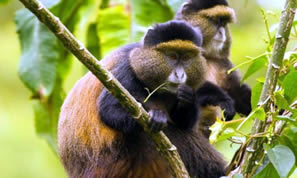 Mgahinag Gorilla National Park