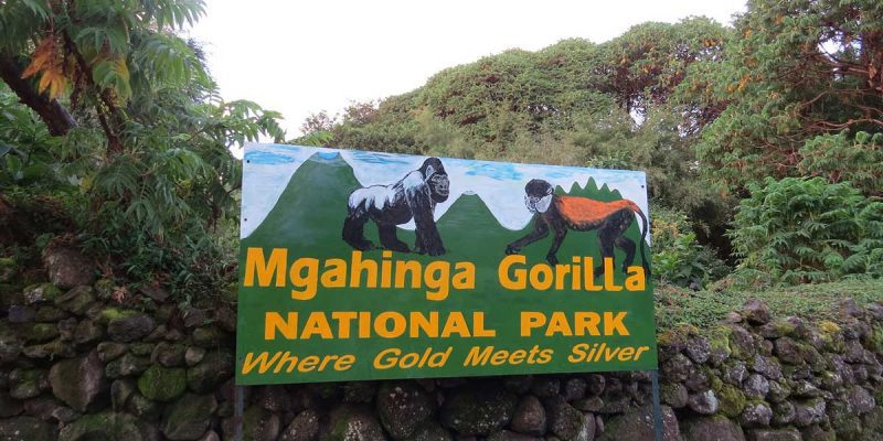 what to see and do in Mgahinga