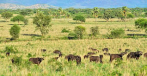 wild animals in Kidepo Valley National Park