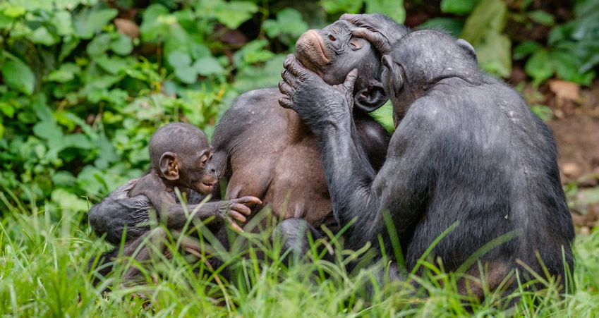 Where to See Apes in Africa