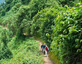 Hiking trails in Nyungwe Forest