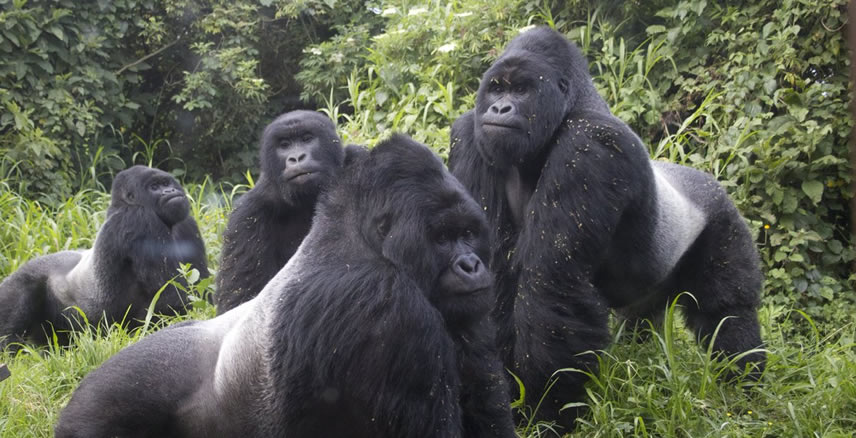 Rwanda Re opens for Tourism –  Discounted Gorilla Permits