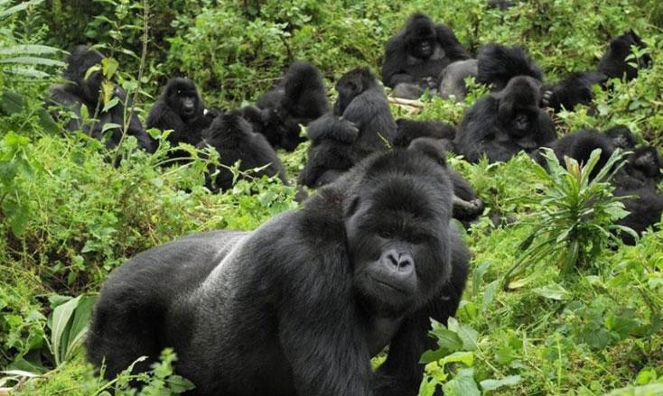 Trek Rwanda gorillas @$200
