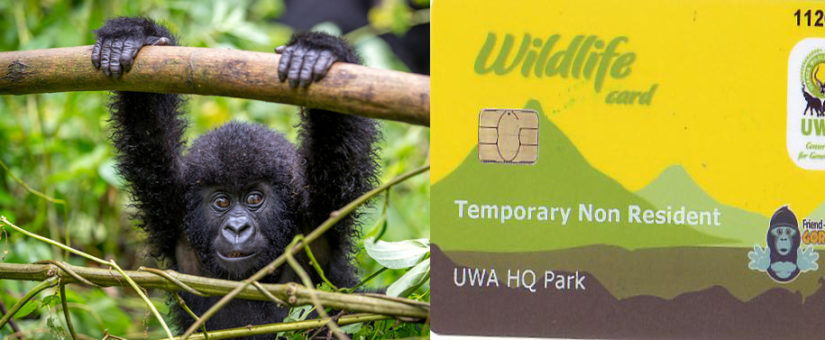 Gorilla Permit Cancellation Policy