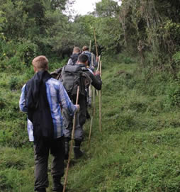comparing gorilla trekking in Uganda & Rwanda