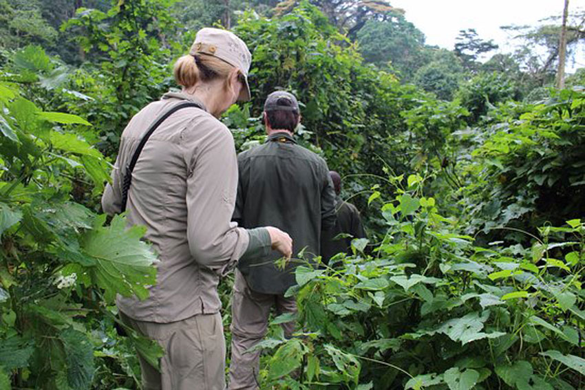 Nature/Forest Walks In Bwindi Forest