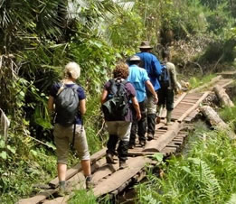 Nature walking in Kibale Forest