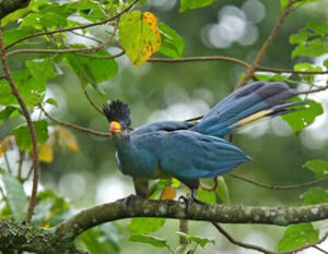 Birding in Kibale Forest National Park