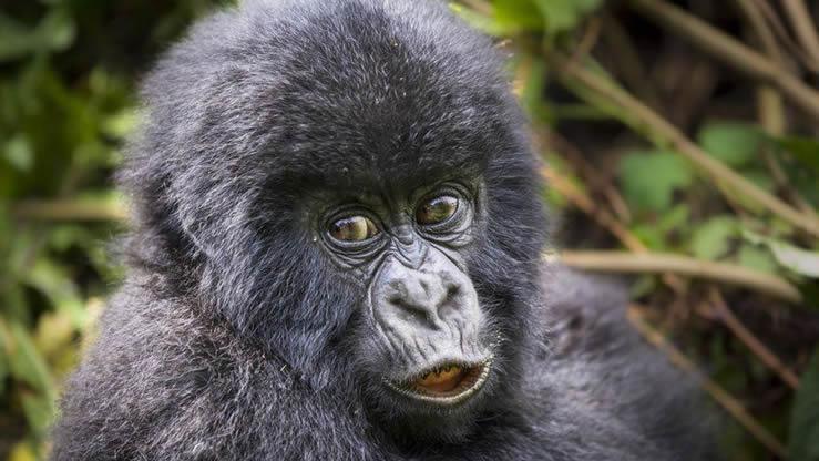 What to know about gorilla trekking