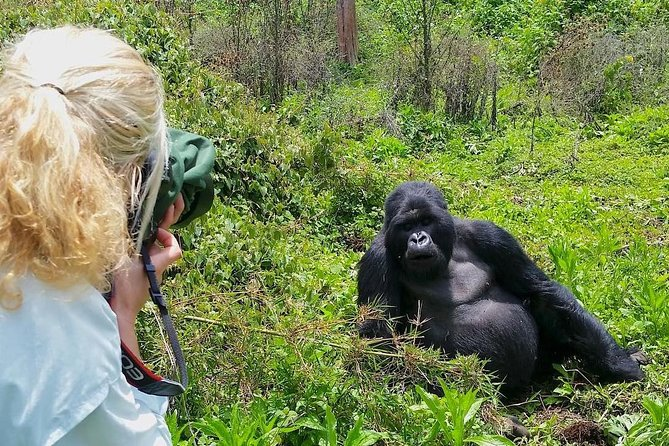 Who Is Eligible to Trek Gorillas
