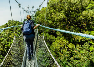 Entrance Fees to Nyungwe Forest