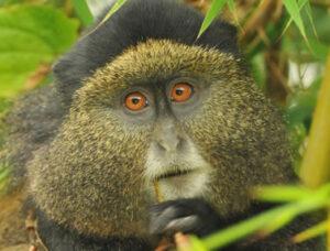 SOPs for primate trekking