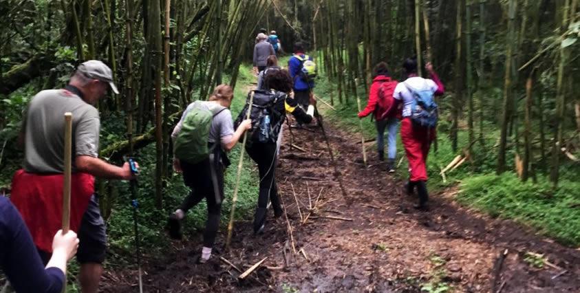 Walking trails in Mgahinga Gorilla National Park