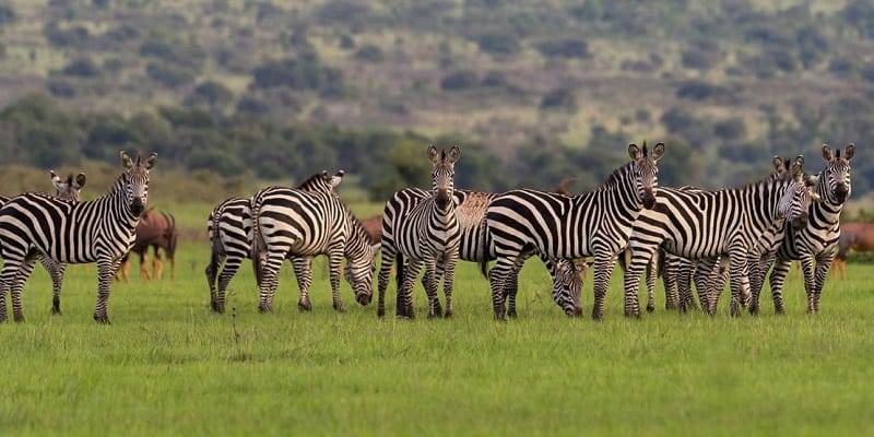 Travel offers in Africa