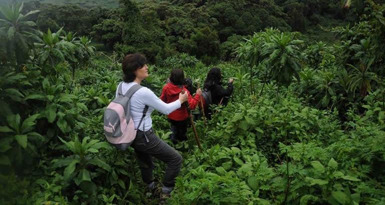 How safe is gorilla trekking