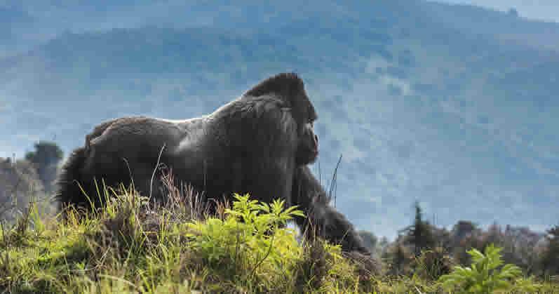 Guide to Gorilla Trekking in Rwanda