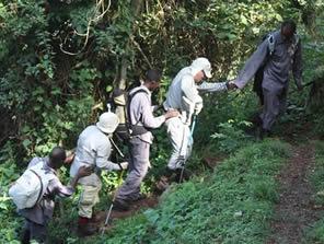 porters for gorilla trekking