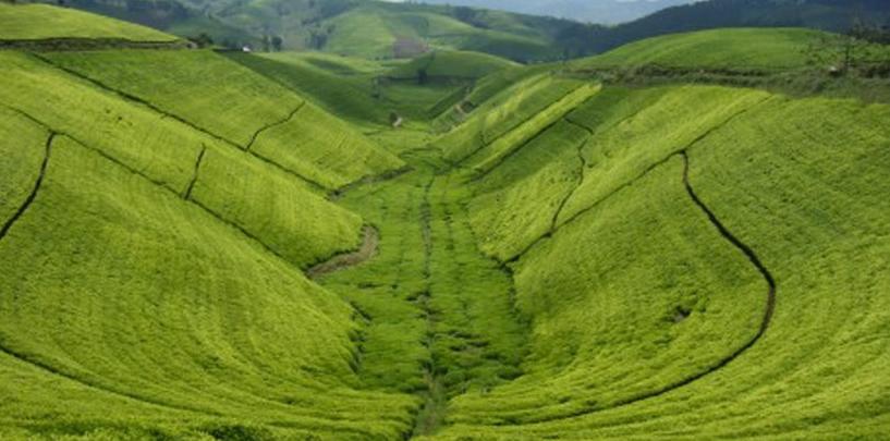 Rwanda rolling hills
